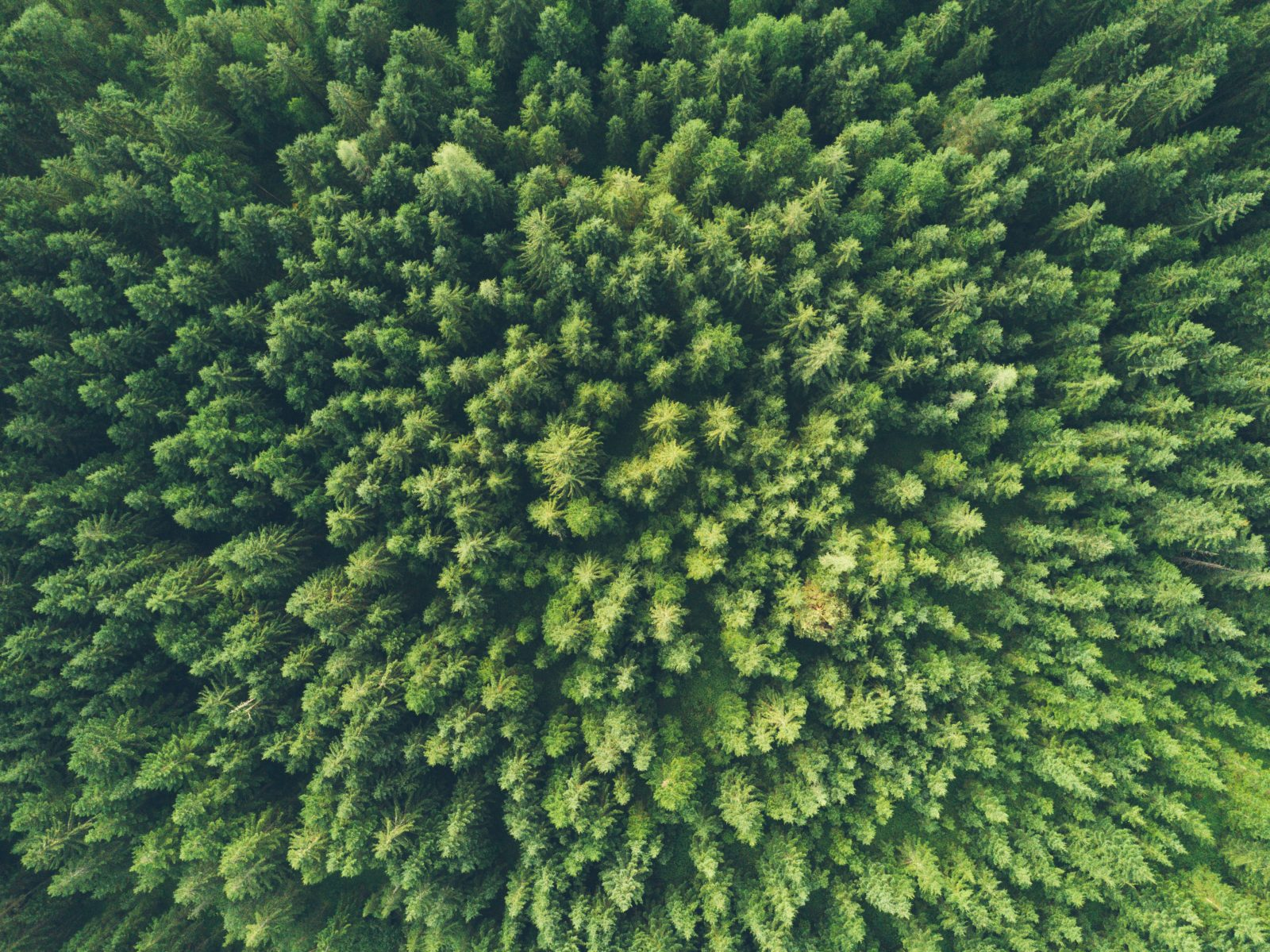 Stewardship as an Environmental and Economic Ethic